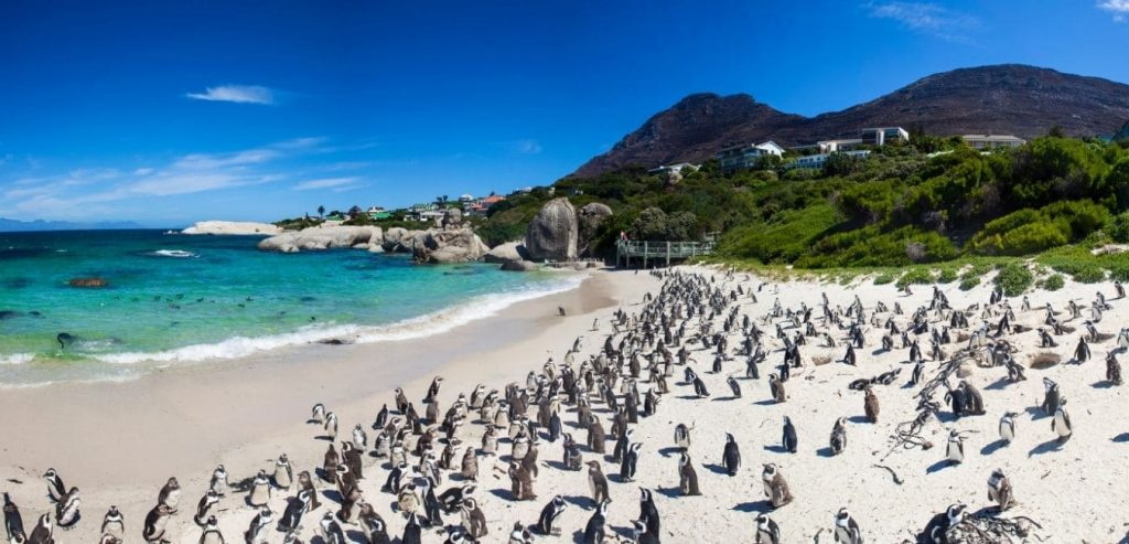 South Africa Beach Day